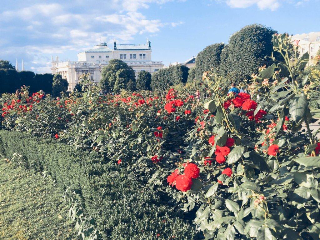 Сад Роза Вена Австрия