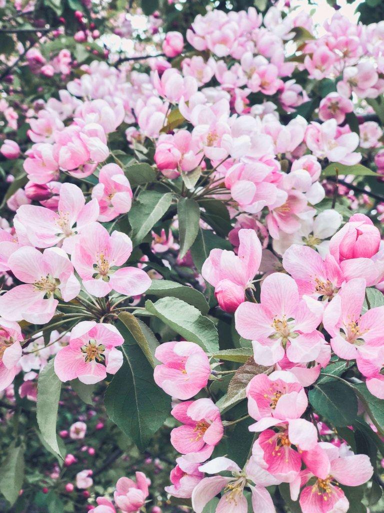 цветущие сады в Москве