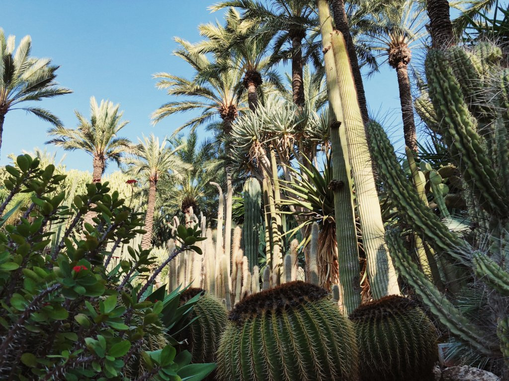 Куда поехать из Аликанте? Куда съездить из Аликанте. Город Эльче Испания. Ботанический сад Эльче. Картахена Испания достопримечательности. Розовое озеро Испания