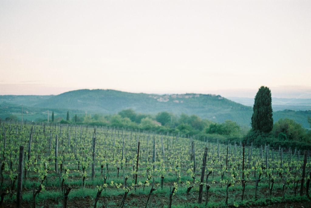 Агротуризм в Италии. Агротуризм в Тоскане отзывы