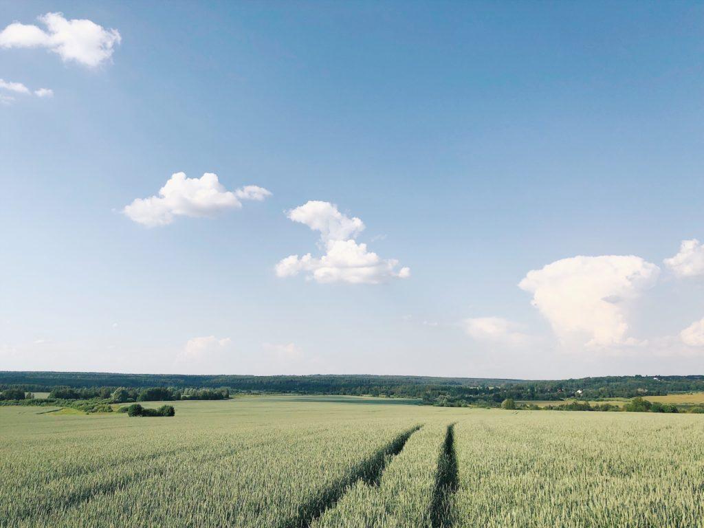 пшеничные поля в подмосковье