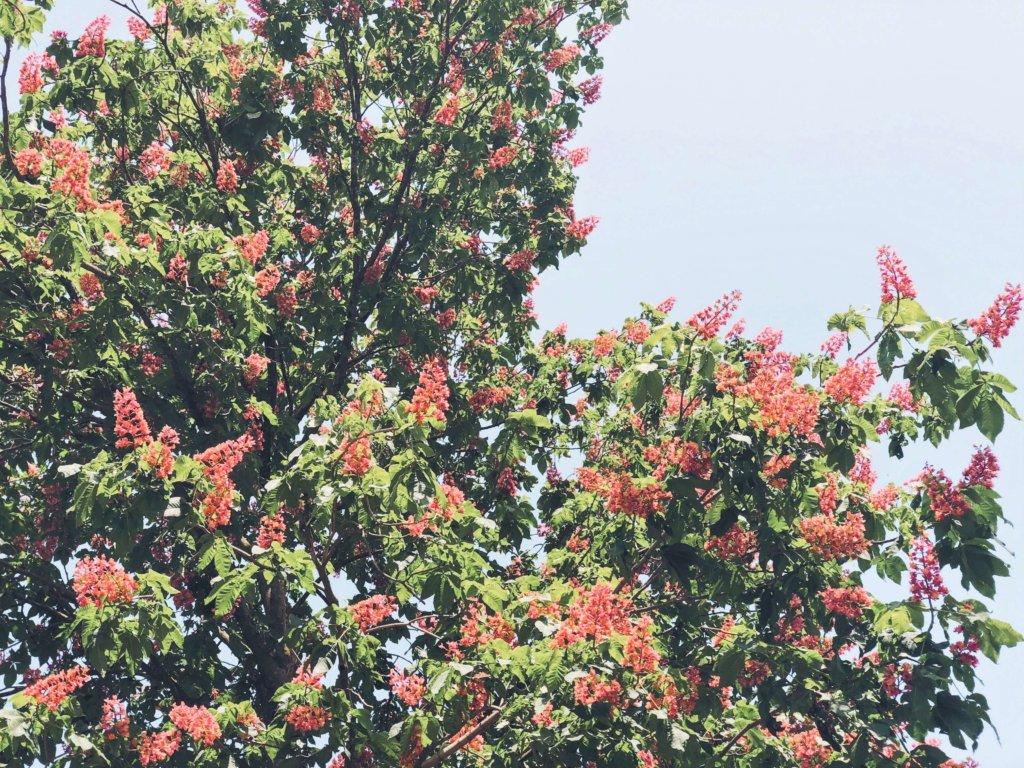 Весеннее цветение в Риме