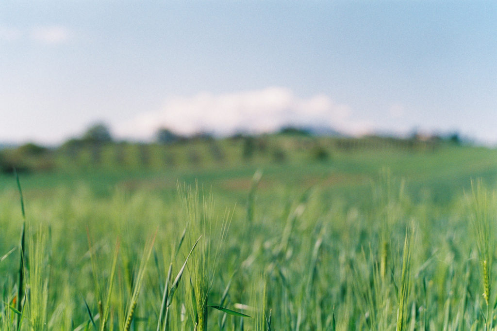 Тосканские поля