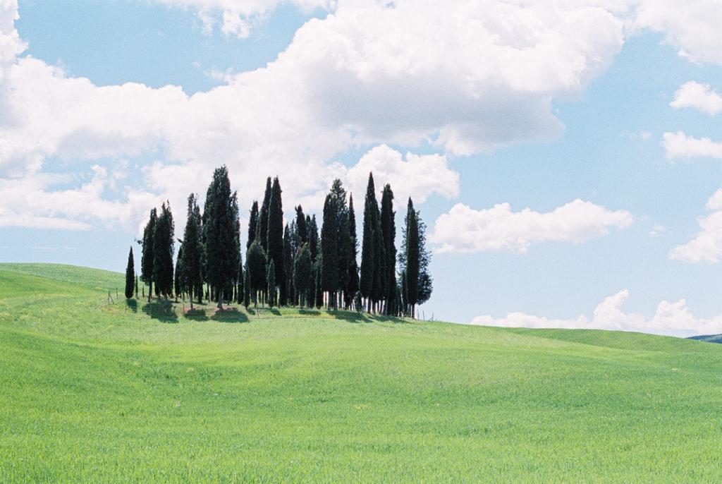 Кипарисы в Тоскане. Тосканские холмы