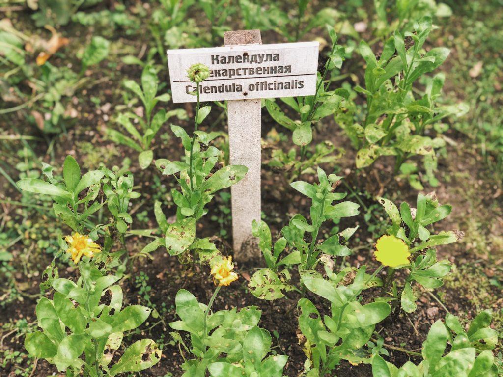 огород лекарственных растений