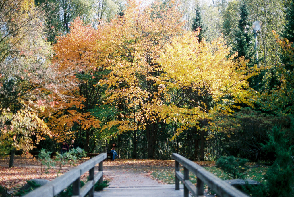 Японский сад в Москве осенью фото