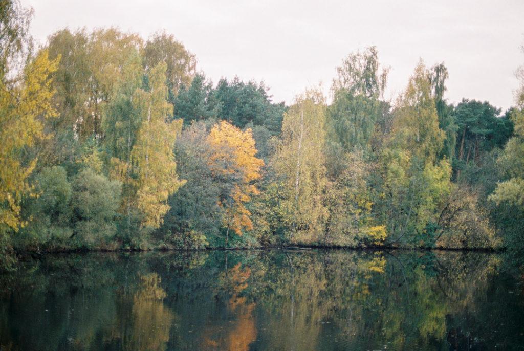 серебряный бор осенью фото