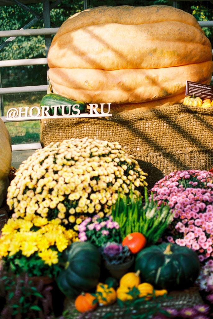гигантская тыквы из аптекарского огорода фото