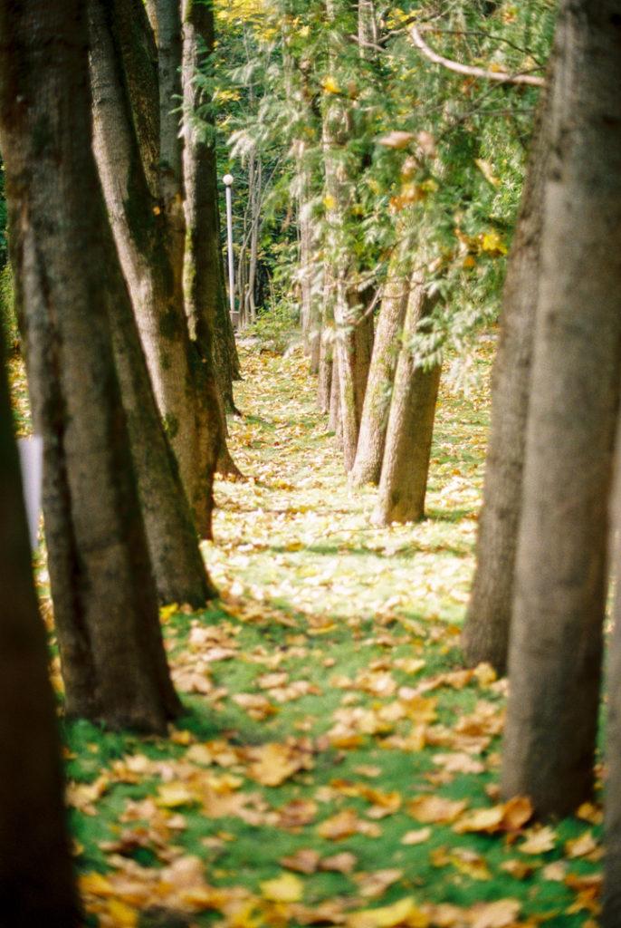 Переделкино осенью фото