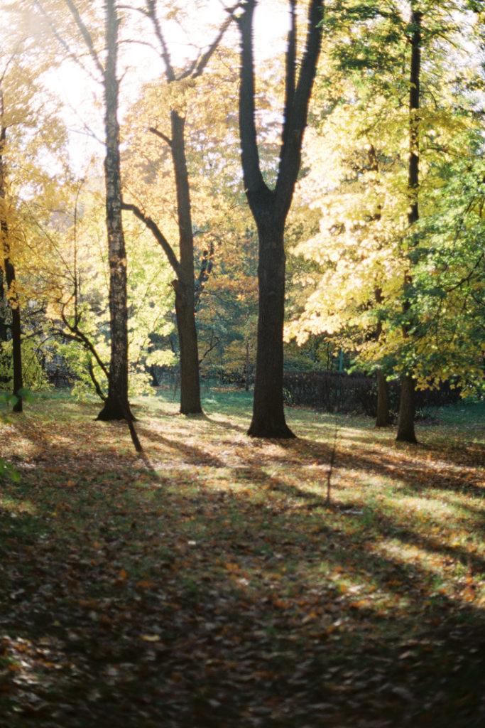 парк Сокольники осенью